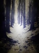 A snowlit path through the trees.